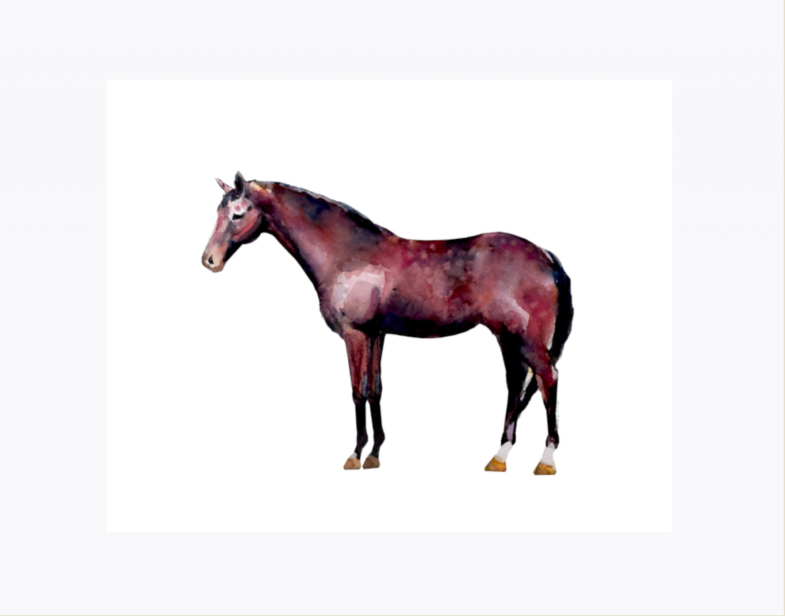 Dapple bay horse