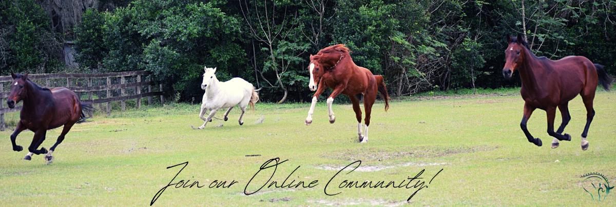 Horses runninginn a herd joyfully join our online community