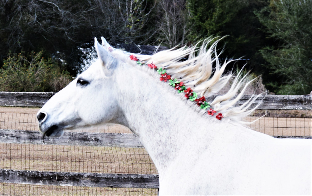 grey horse with flowers in her flowing mane