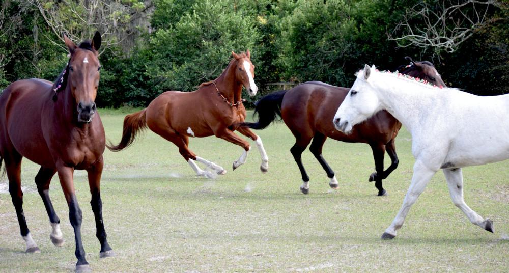 horses galloping